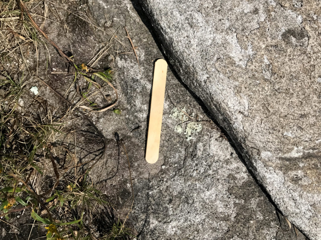 Used popsicle sticks are often dropped on the mountain by thoughtless consumers. 9-16-17